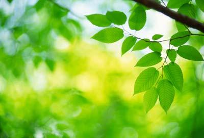sustainability_01